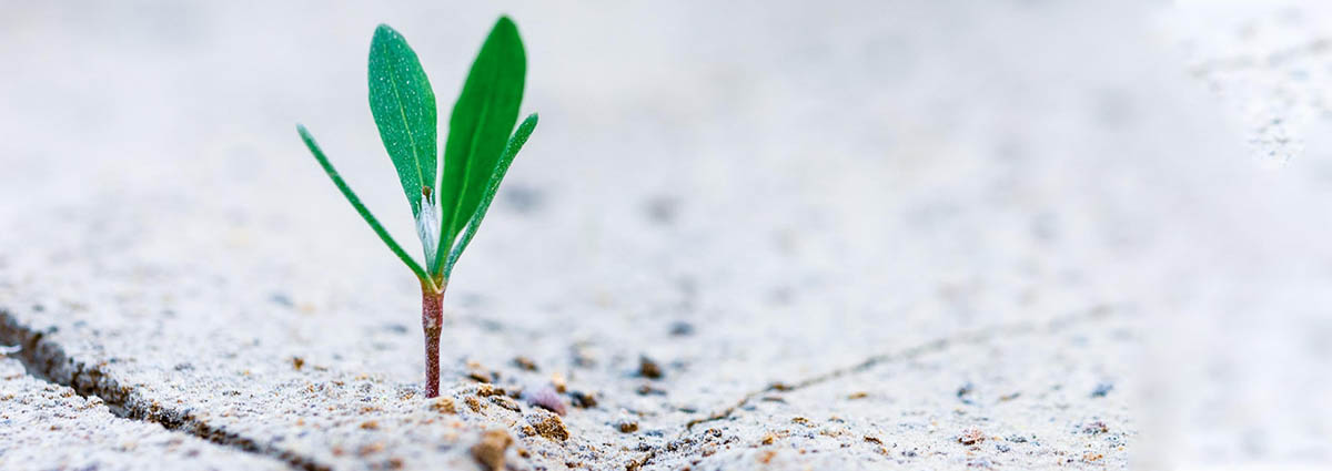 hardy training trasformare circostanze negative in opportunità